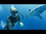 Shark Diving with Ben Brown