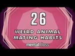 26 Weird Animal Mating Habits