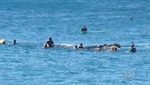 Surfer knocked unconsious by whale at Bondi Beach